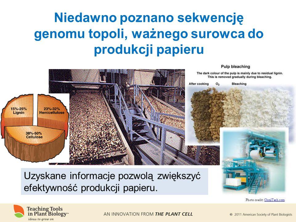 Niedawno poznano sekwencję genomu topoli, ważnego surowca do produkcji papieru Uzyskane informacje pozwolą zwiększyć efektywność produkcji papieru.