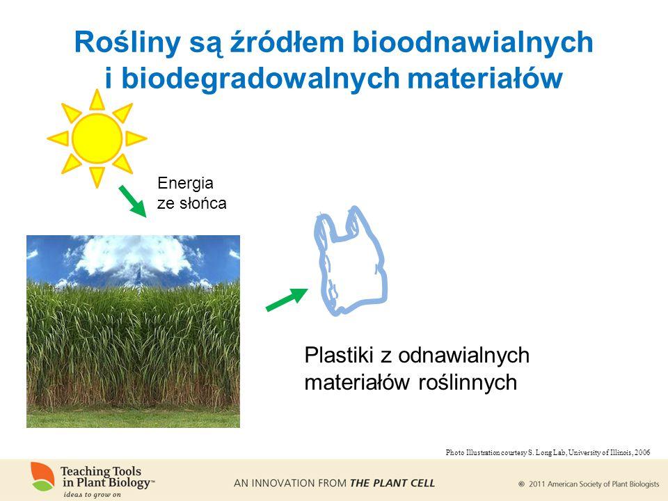 Rośliny są źródłem bioodnawialnych i biodegradowalnych materiałów Energia ze słońca Plastiki z odnawialnych materiałów roślinnych Photo Illustration courtesy S.