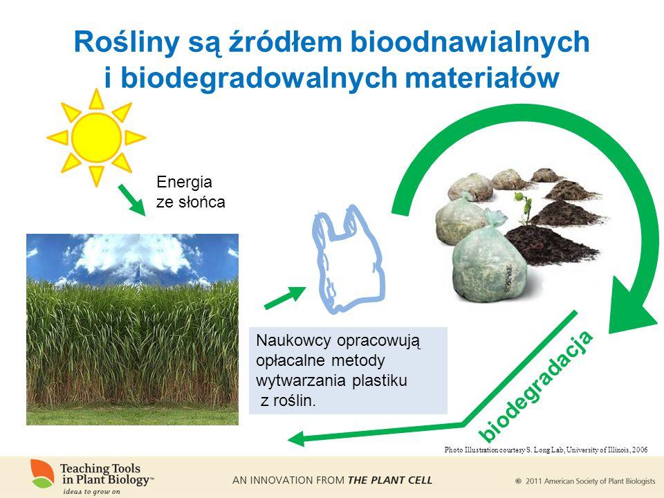 biodegradacja Rośliny są źródłem bioodnawialnych i biodegradowalnych materiałów Naukowcy opracowują opłacalne metody wytwarzania plastiku z roślin.