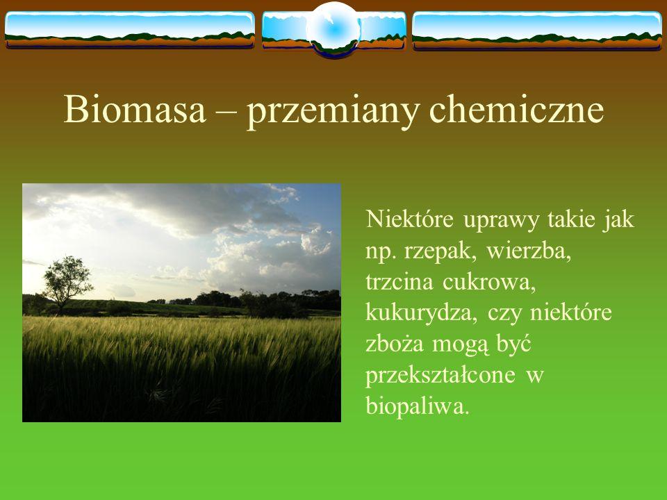 Biomasa – przemiany chemiczne Niektóre uprawy takie jak np. rzepak, wierzba, trzcina cukrowa, kukurydza, czy niektóre zboża mogą być przekształcone w