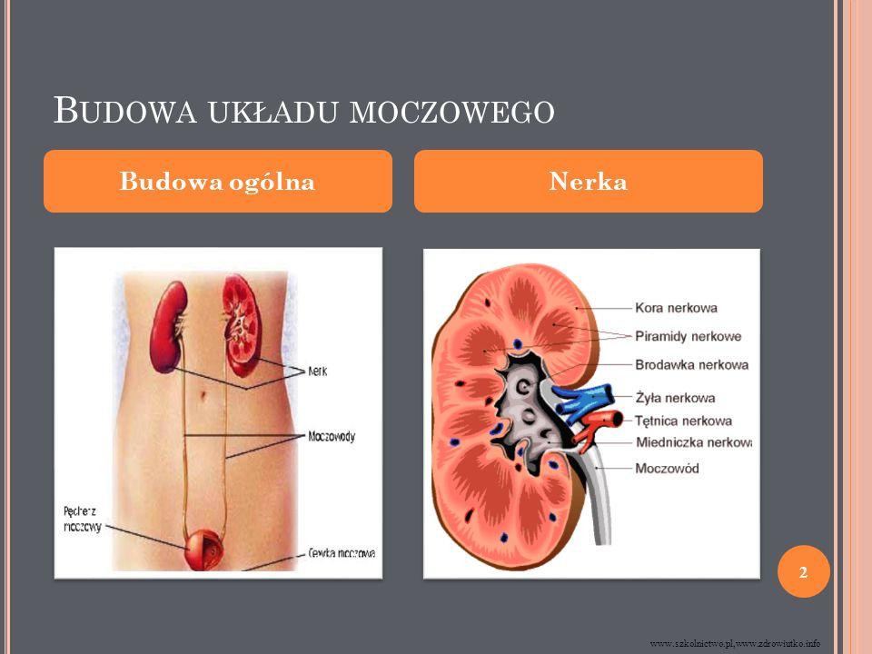 B UDOWA UKŁADU MOCZOWEGO Budowa ogólnaNerka www.szkolnictwo.pl,www.zdrowiutko.info 2