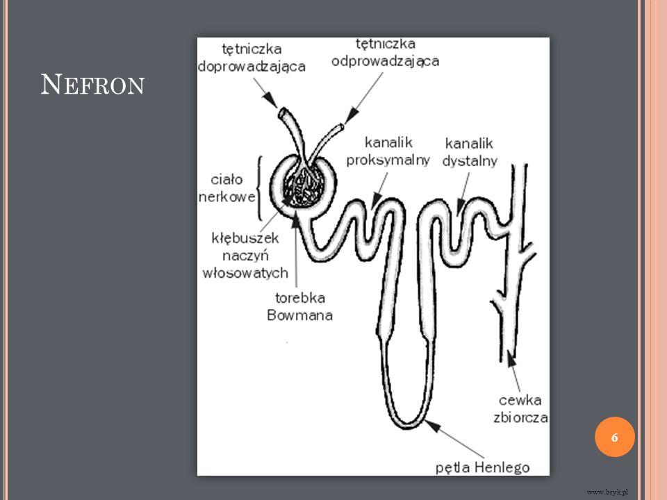 ETAPY POWSTAWANIA MOCZU Filtracja ultrasączenie – zachodzi w kłębuszkach nerkowych, dzięki różnicy pomiędzy krwią tętniczą, a płynem w torebce Bowmana.