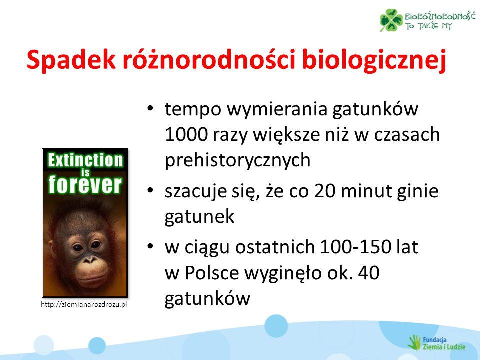 Spadek różnorodności biologicznej tempo wymierania gatunków 1000 razy większe niż w czasach prehistorycznych szacuje się, że co 20 minut ginie gatunek w ciągu ostatnich 100-150 lat w Polsce wyginęło ok.