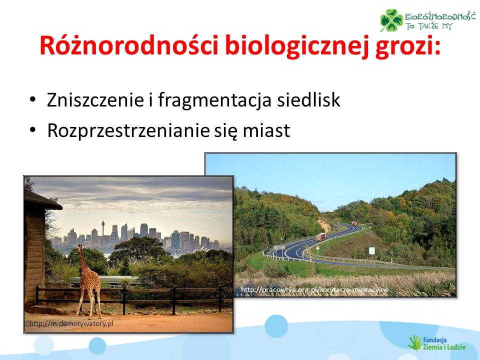 Różnorodności biologicznej grozi: Zniszczenie i fragmentacja siedlisk Rozprzestrzenianie się miast http://pracownia.org.pl/korytarze-migracyjne http://m.demotywatory.pl