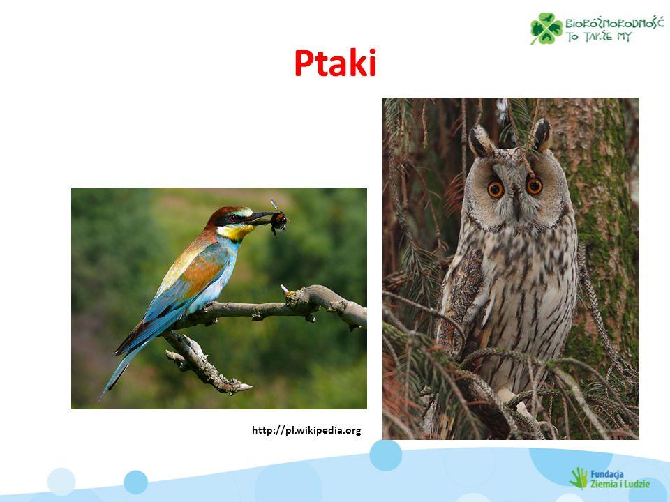 Ptaki http://pl.wikipedia.org