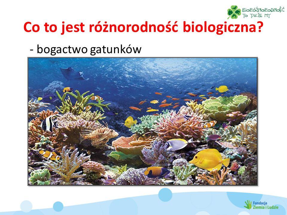 Co to jest różnorodność biologiczna? - bogactwo gatunków