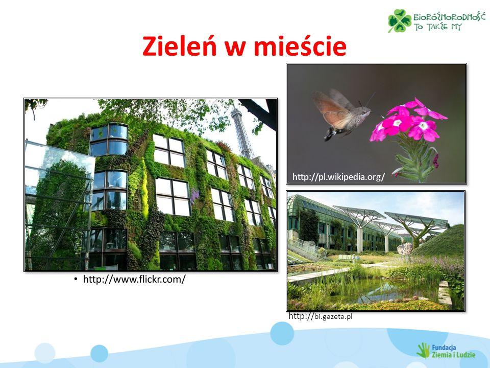 Zieleń w mieście http:// bi.gazeta.pl http://pl.wikipedia.org/