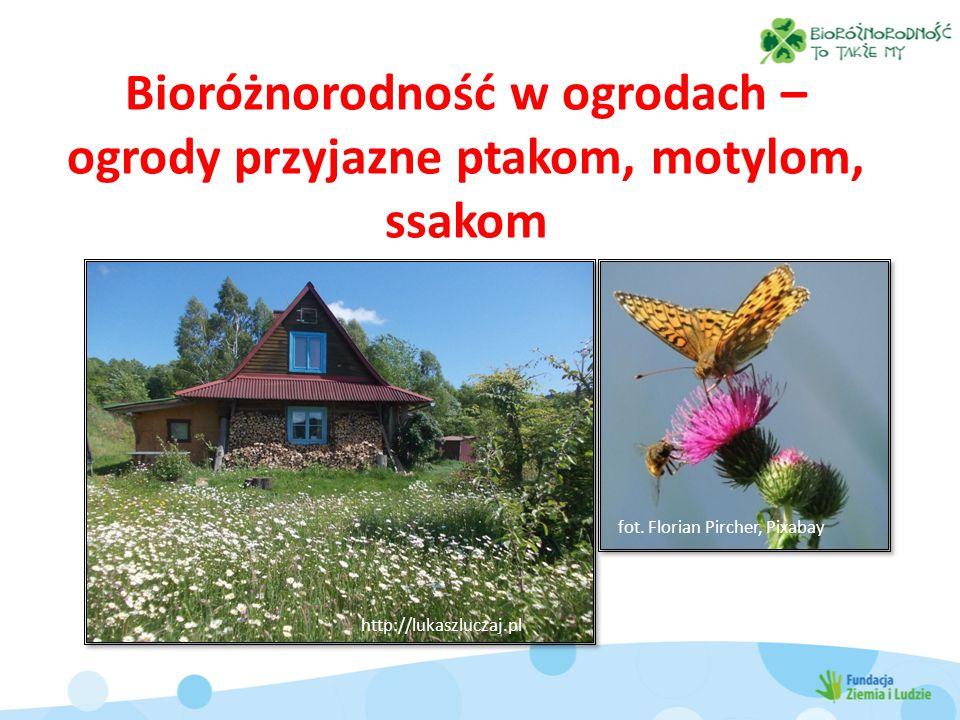 Bioróżnorodność w ogrodach – ogrody przyjazne ptakom, motylom, ssakom fot.