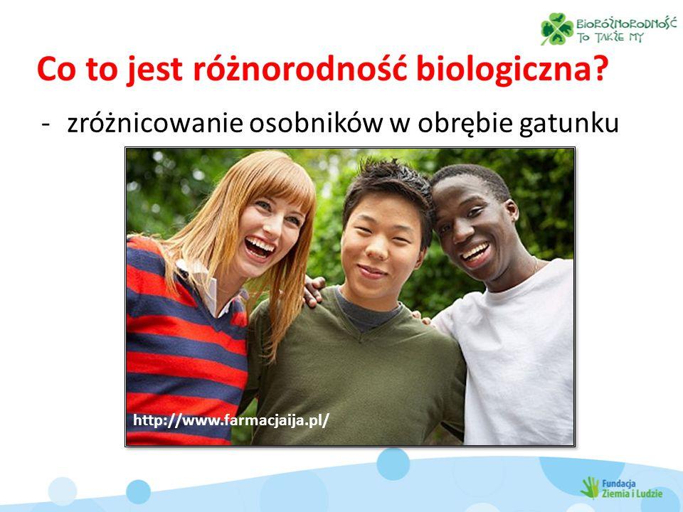 -zróżnicowanie osobników w obrębie gatunku http://www.farmacjaija.pl/