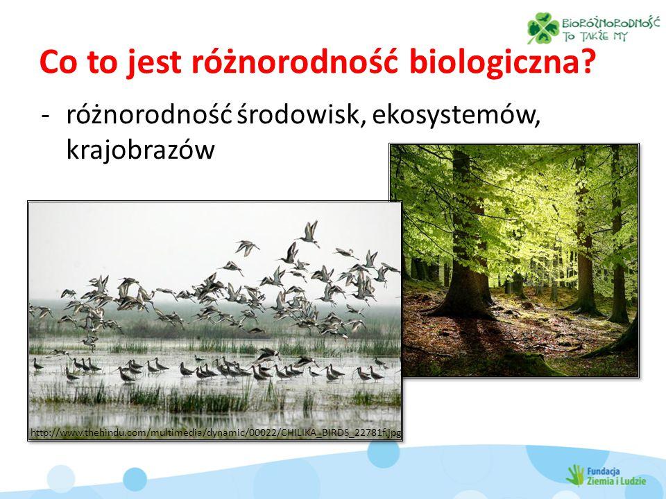 Bioróżnorodność rolnicza różnorodność ras i odmian wyhodowanych przez człowieka Dziedzictwo biologiczne i kulturowe świata http://pl.wikipedia.org