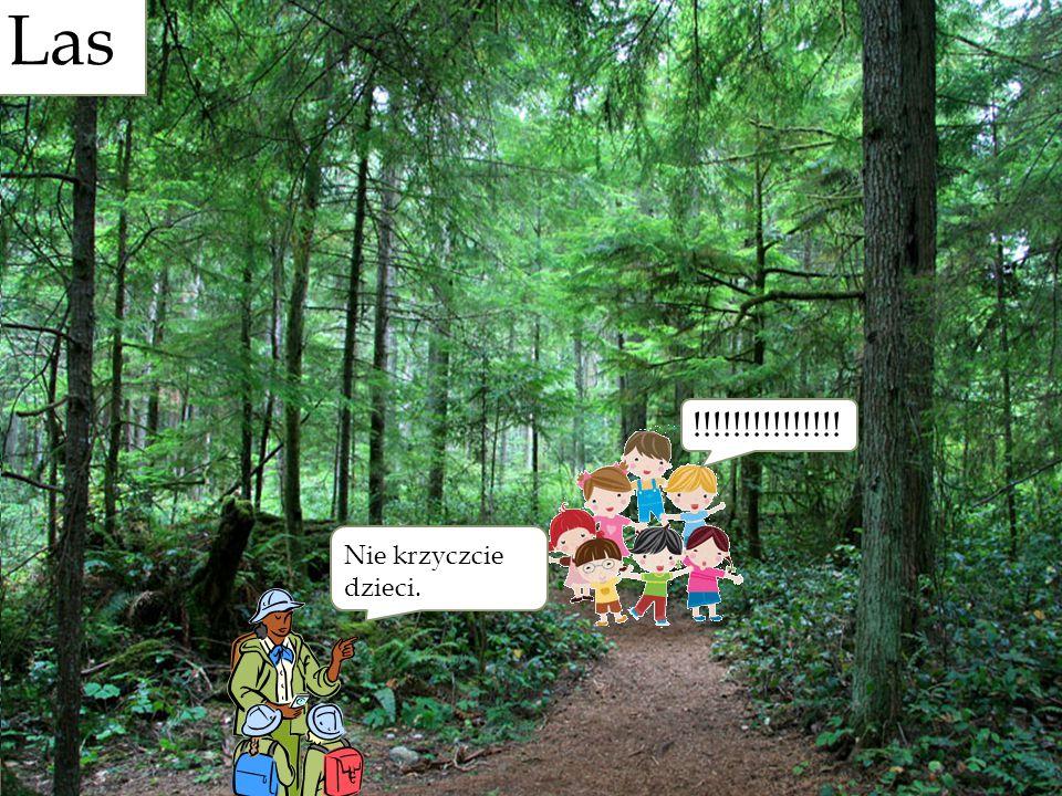 ! !!!!!!!!!!!!!!! Nie krzyczcie dzieci. Las