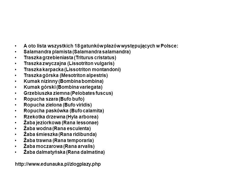 A oto lista wszystkich 18 gatunków płazów występujących w Polsce: Salamandra plamista (Salamandra salamandra) Traszka grzebieniasta (Triturus cristatu