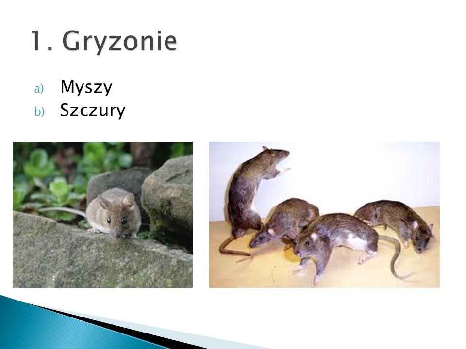 a) Myszy b) Szczury