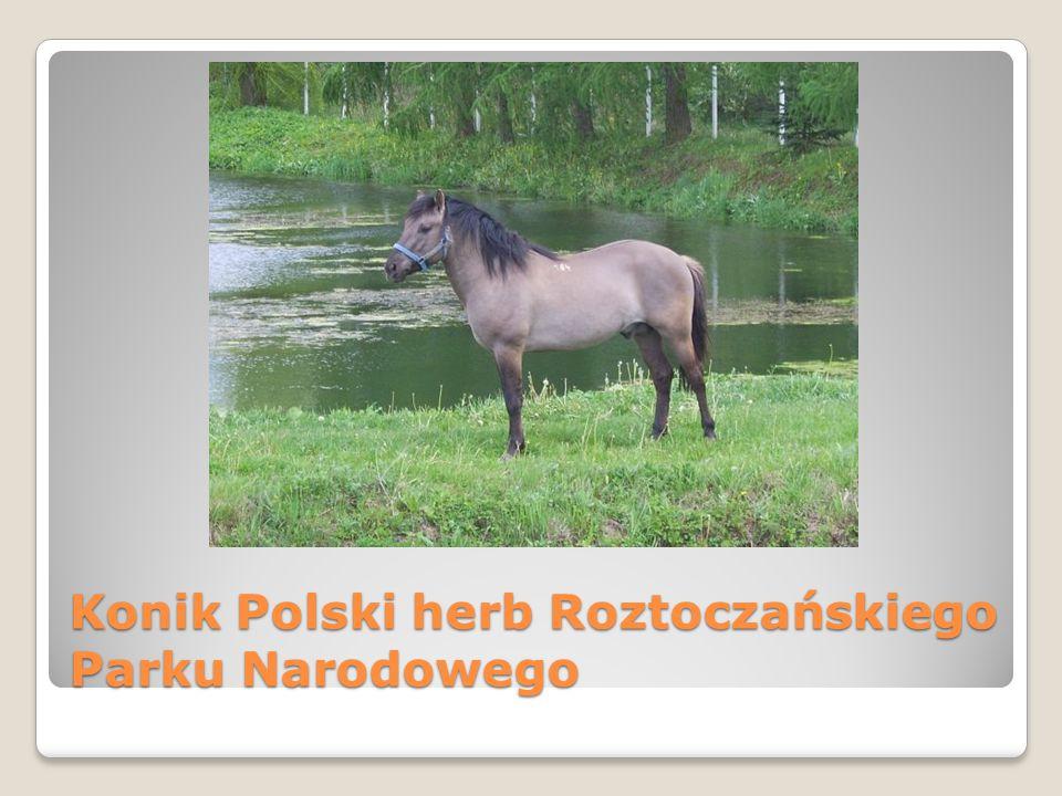 Konik Polski herb Roztoczańskiego Parku Narodowego