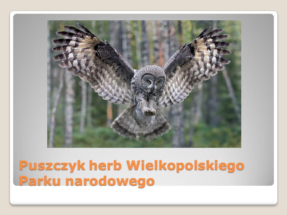 Puszczyk herb Wielkopolskiego Parku narodowego