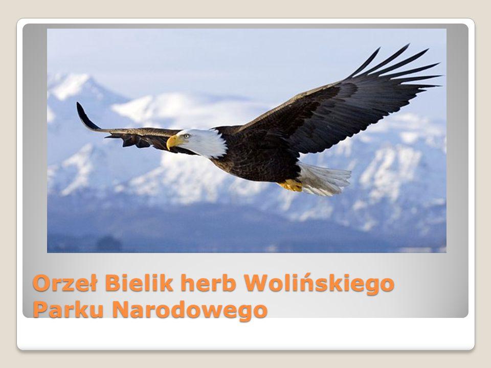 Orzeł Bielik herb Wolińskiego Parku Narodowego
