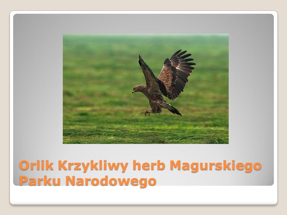 Orlik Krzykliwy herb Magurskiego Parku Narodowego