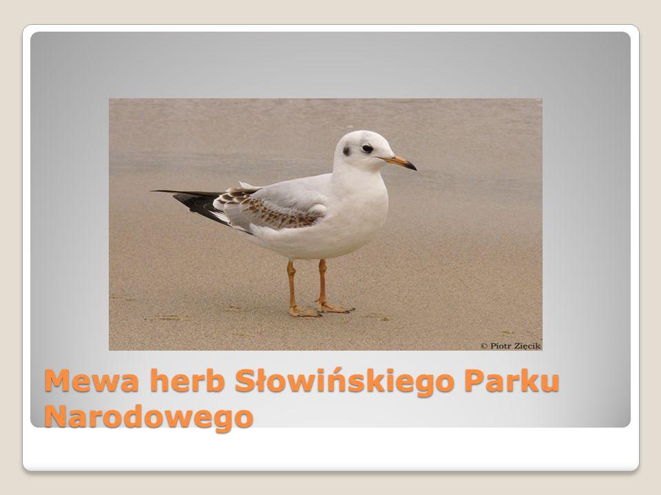 Mewa herb Słowińskiego Parku Narodowego