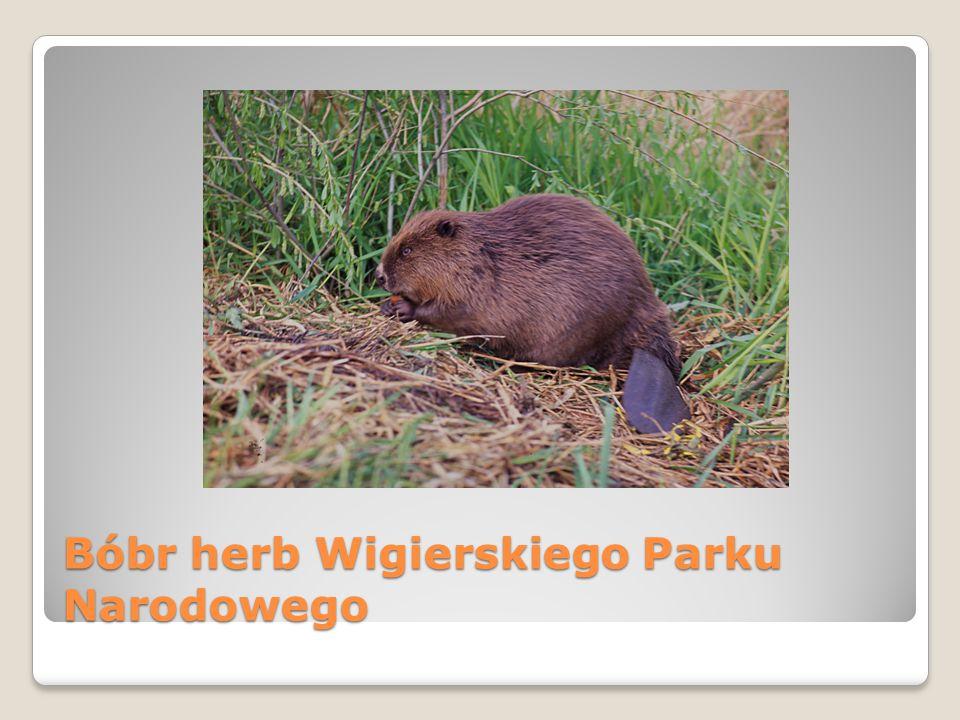 Bóbr herb Wigierskiego Parku Narodowego