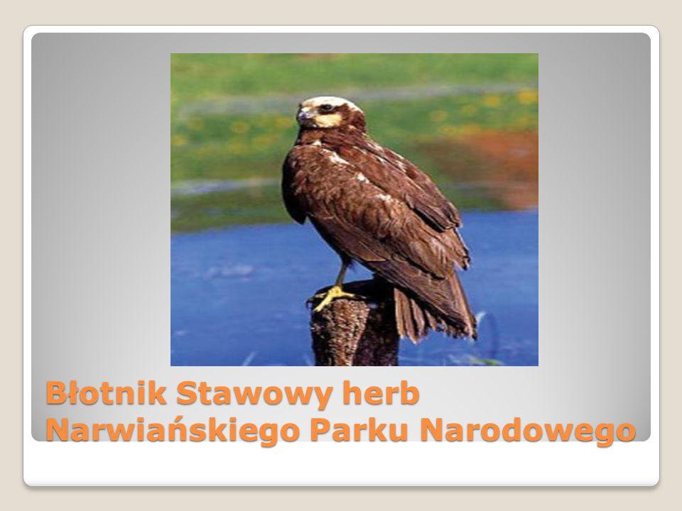 Błotnik Stawowy herb Narwiańskiego Parku Narodowego