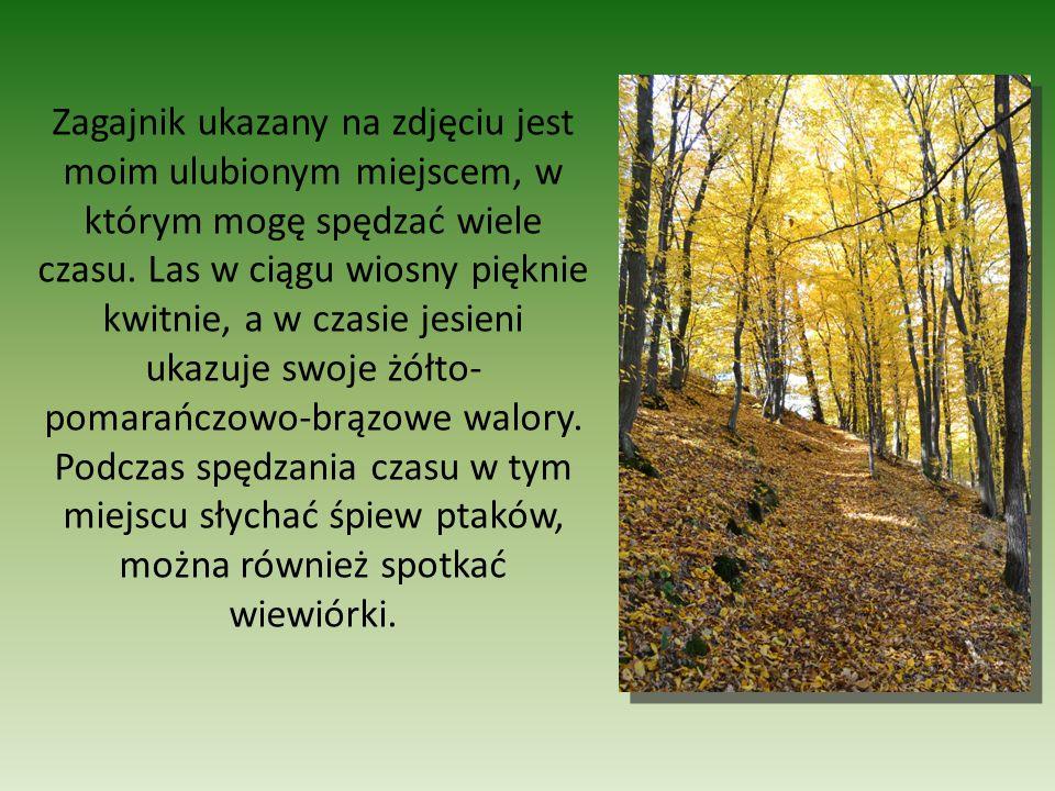 W pobliskim lesie można podziwiać także wyrzeźbione drzewa przez bobry.
