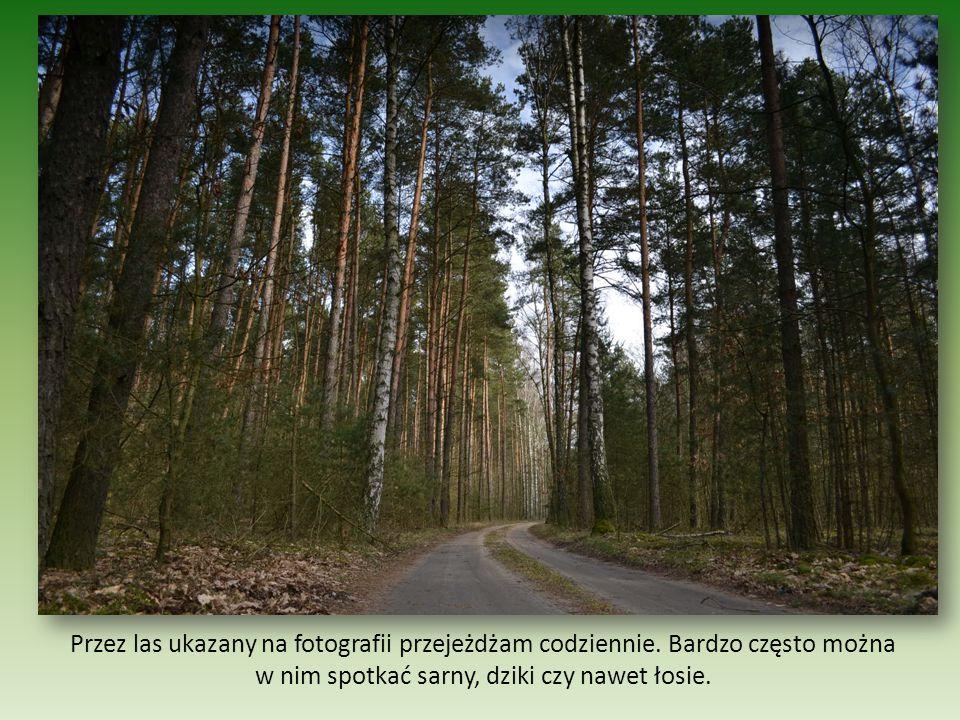 W każdym lesie jest coś wyjątkowego.