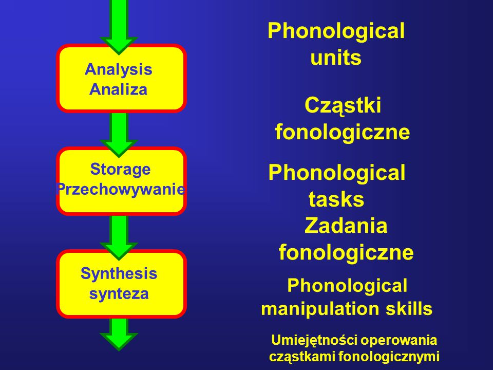34 Analysis Analiza Storage Przechowywanie Synthesis synteza Phonological units Phonological tasks Phonological manipulation skills Cząstki fonologicz