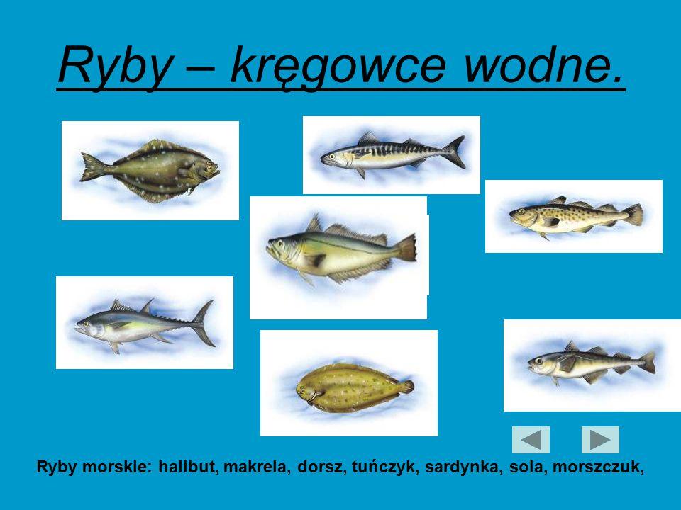 Ryby – kręgowce wodne.