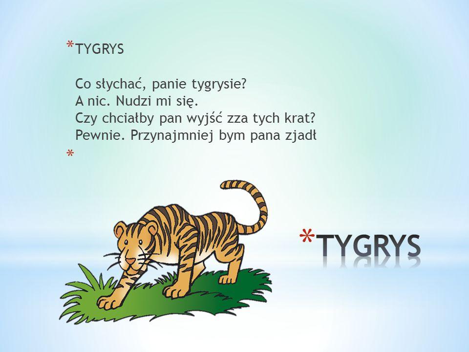 * TYGRYS Co słychać, panie tygrysie? A nic. Nudzi mi się. Czy chciałby pan wyjść zza tych krat? Pewnie. Przynajmniej bym pana zjadł