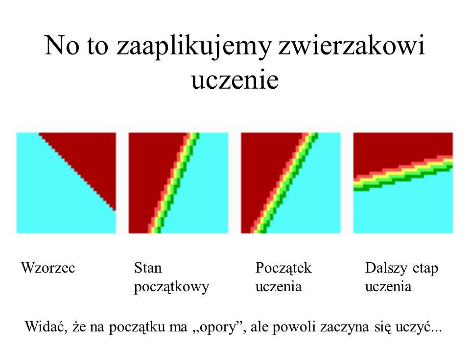 """Wyposażmy naszego zwierzaka w """"mózg w postaci bardzo prostej jednowarstwowej sieci neuronowej i spróbujmy przeprowadzić jego uczenie Zaczniemy od próby wyuczenia zwierzaka, żeby lubił gwarne śródmieście w samo południe: Zwierzak początkowo wcale nie ma na to ochoty, bo jego zachowanie wynikające z początkowych (przypadkowych!) wartości wag neuronów obrazuje mapa: zwierzak Jest to jak widać zwolennik dyskoteki i sypialni (?) Ale zwierzak nam się trafił ."""