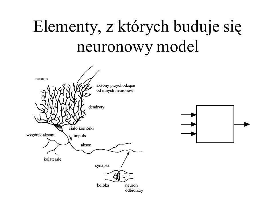 Komórka nerwowa ma wyraźnie zdefiniowany kierunek przepływu sygnałów, co pozwala wyróżnić jej wejścia (jest ich wiele) oraz wyjście.