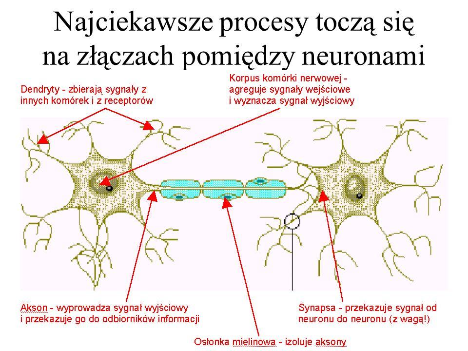 Bywają komórki o takiej budowie, że trudno orzec, gdzie jest ich wejście, a gdzie wyjście