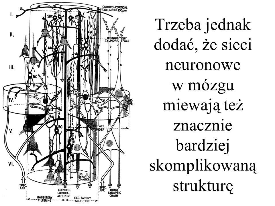 Przy budowie sztucznych sieci neuronowych najczęściej przyjmuje się, że ich budowa jest złożona z warstw, podobnie jak na przykład struktury neuronowe zlokalizowane w siatkówce oka