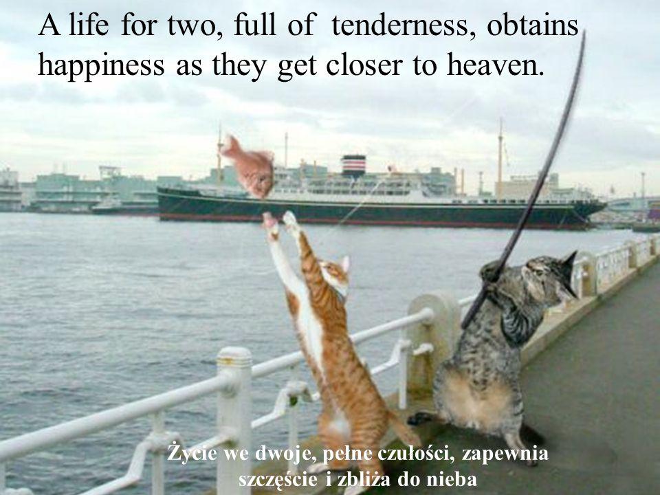 Les meilleures photos de L année 2005 D après NBC A life for two, full of tenderness, obtains happiness as they get closer to heaven.