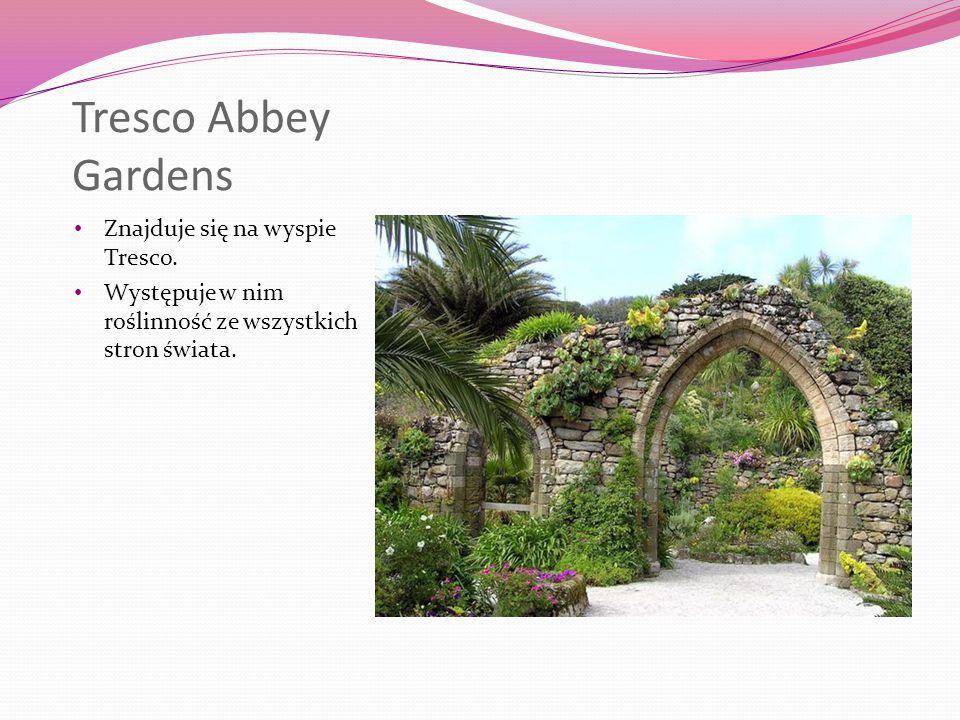 Tresco Abbey Gardens Znajduje się na wyspie Tresco.