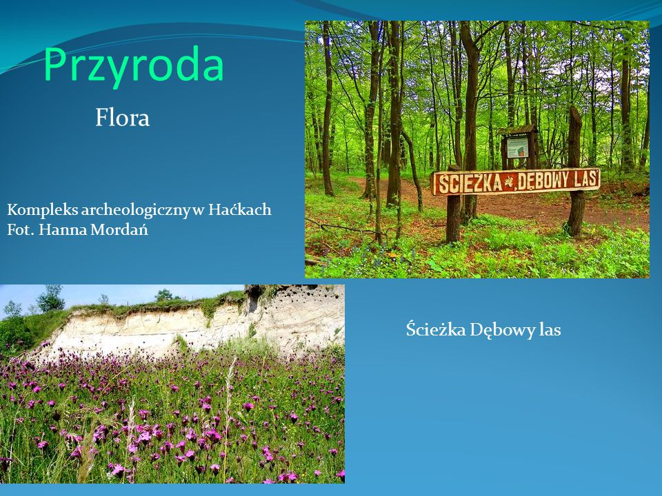 Przyroda Ścieżka Dębowy las Kompleks archeologiczny w Haćkach Fot. Hanna Mordań Flora