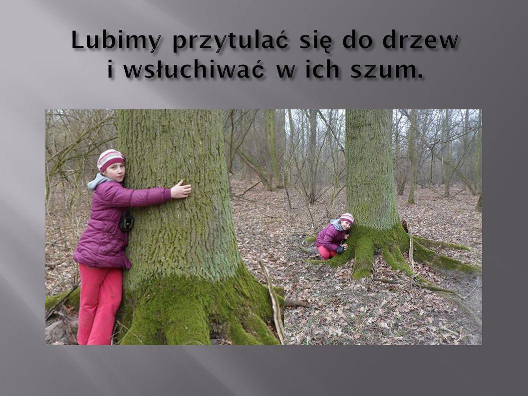 Lubimy przytula ć si ę do drzew i ws ł uchiwa ć w ich szum.