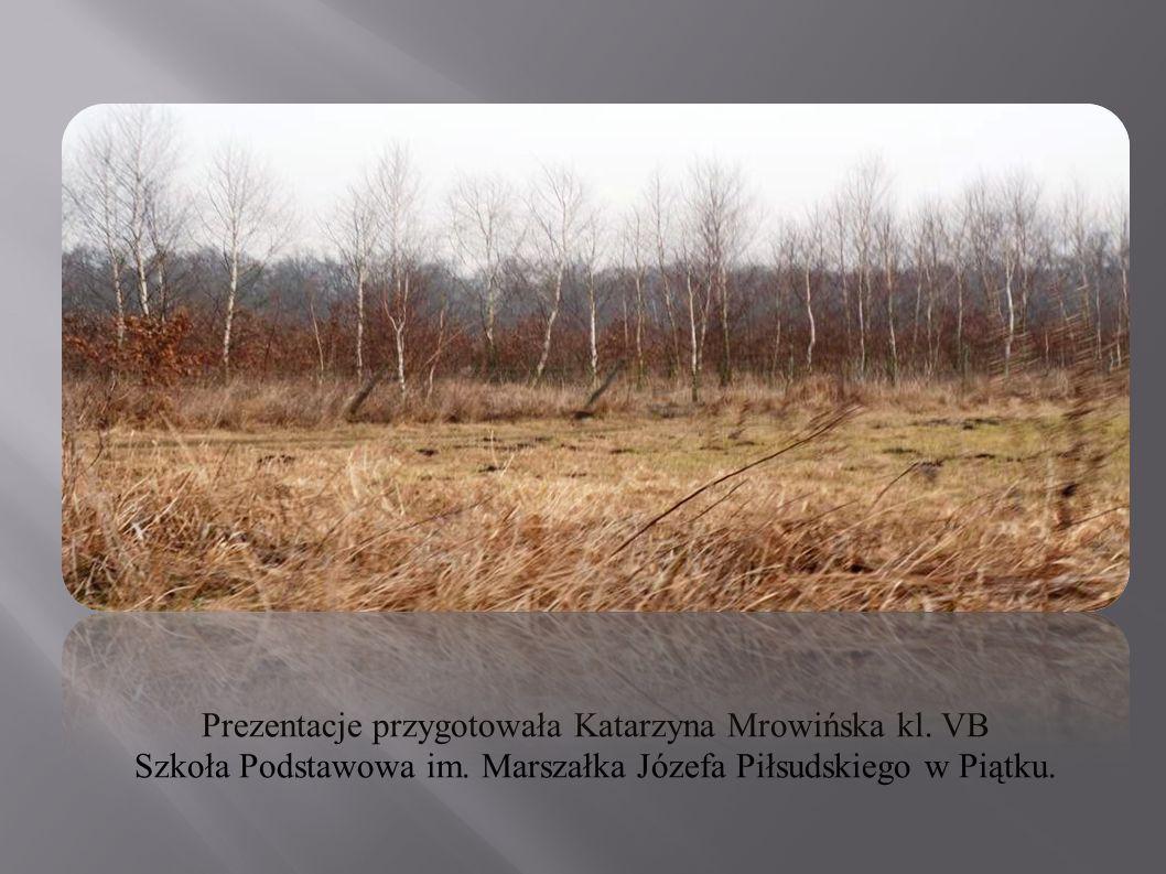 Prezentacje przygotowała Katarzyna Mrowińska kl. VB Szkoła Podstawowa im. Marszałka Józefa Piłsudskiego w Piątku.