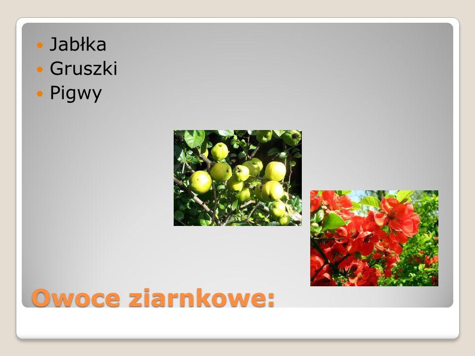 Owoce ziarnkowe: Jabłka Gruszki Pigwy