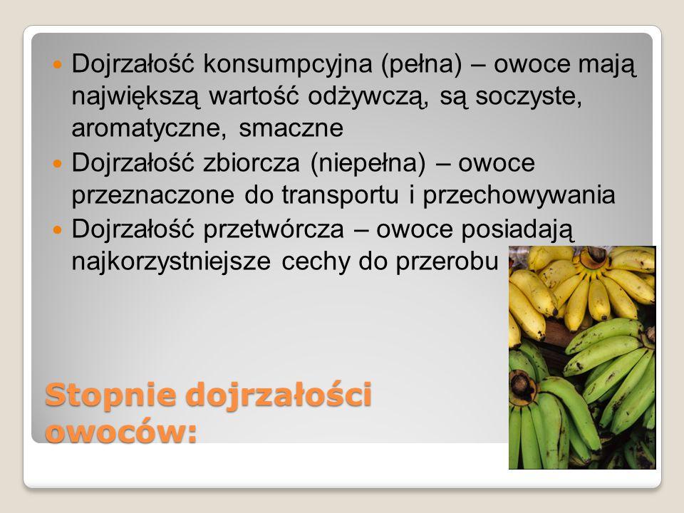 Stopnie dojrzałości owoców: Dojrzałość konsumpcyjna (pełna) – owoce mają największą wartość odżywczą, są soczyste, aromatyczne, smaczne Dojrzałość zbi