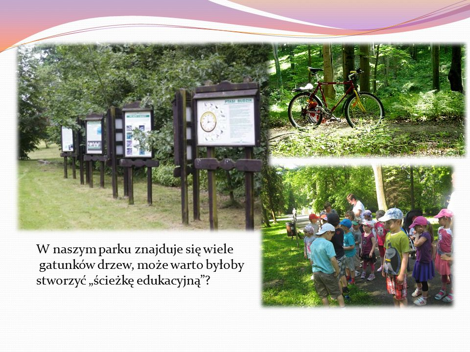 """W naszym parku znajduje się wiele gatunków drzew, może warto byłoby stworzyć """"ścieżkę edukacyjną"""