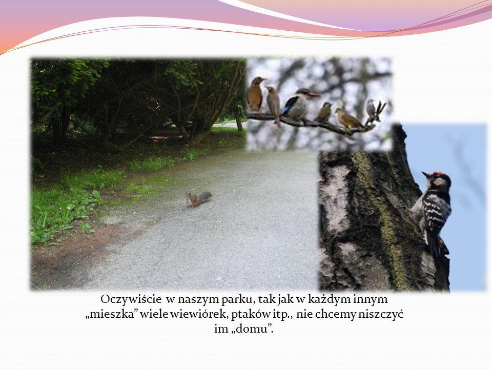 """Oczywiście w naszym parku, tak jak w każdym innym """"mieszka wiele wiewiórek, ptaków itp., nie chcemy niszczyć im """"domu ."""