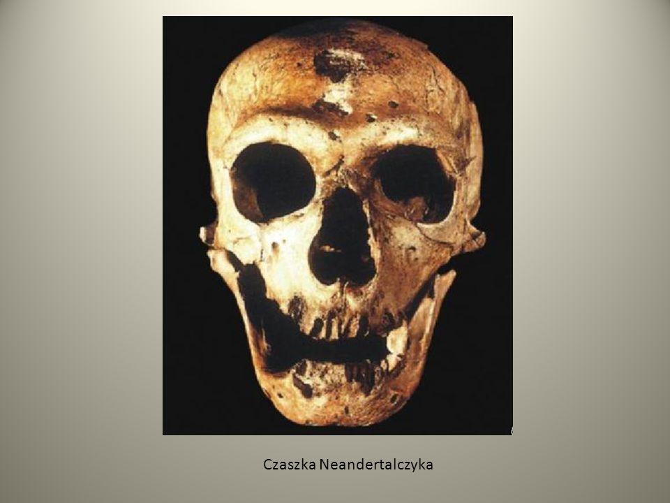 Czaszka Neandertalczyka