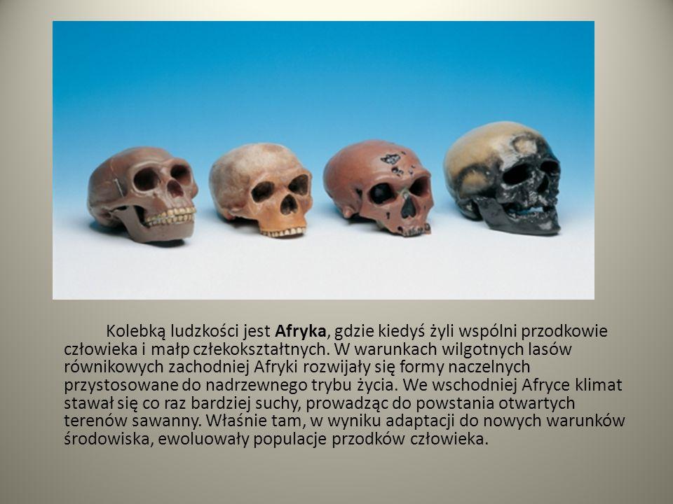 Kolebką ludzkości jest Afryka, gdzie kiedyś żyli wspólni przodkowie człowieka i małp człekokształtnych. W warunkach wilgotnych lasów równikowych zacho