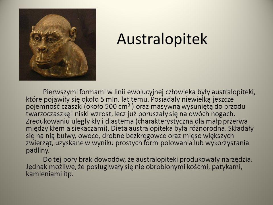 Homo habilis Przed około 3 mln.