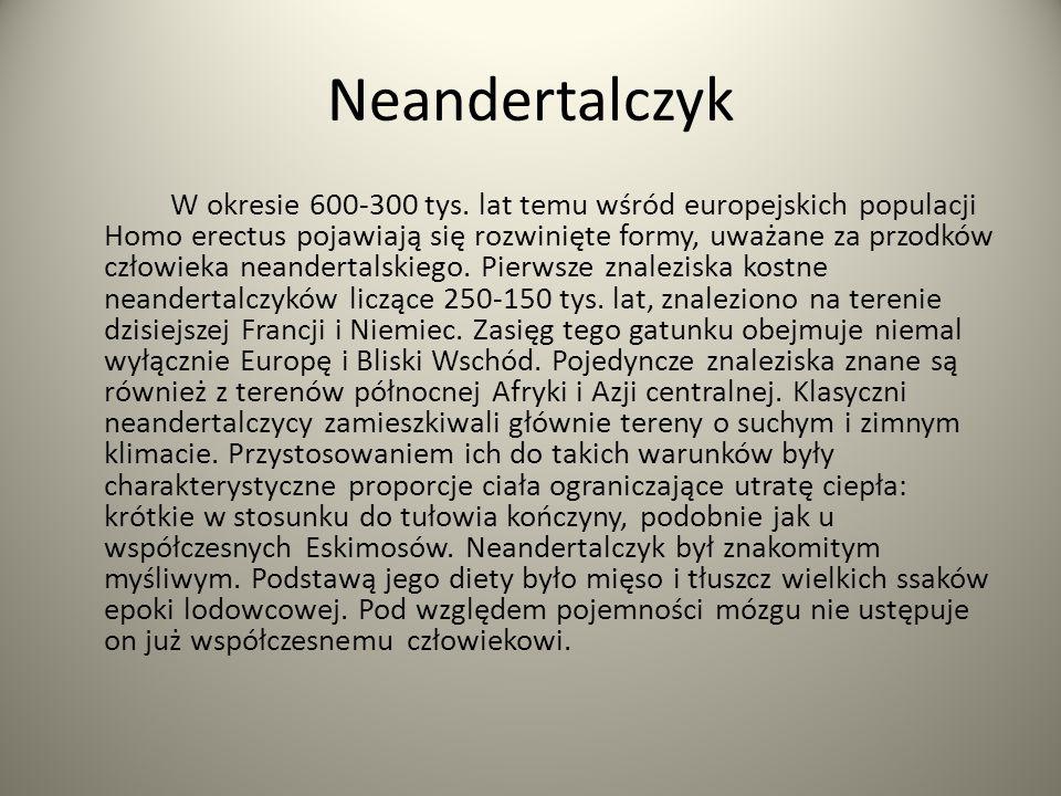 Neandertalczyk W okresie 600-300 tys. lat temu wśród europejskich populacji Homo erectus pojawiają się rozwinięte formy, uważane za przodków człowieka