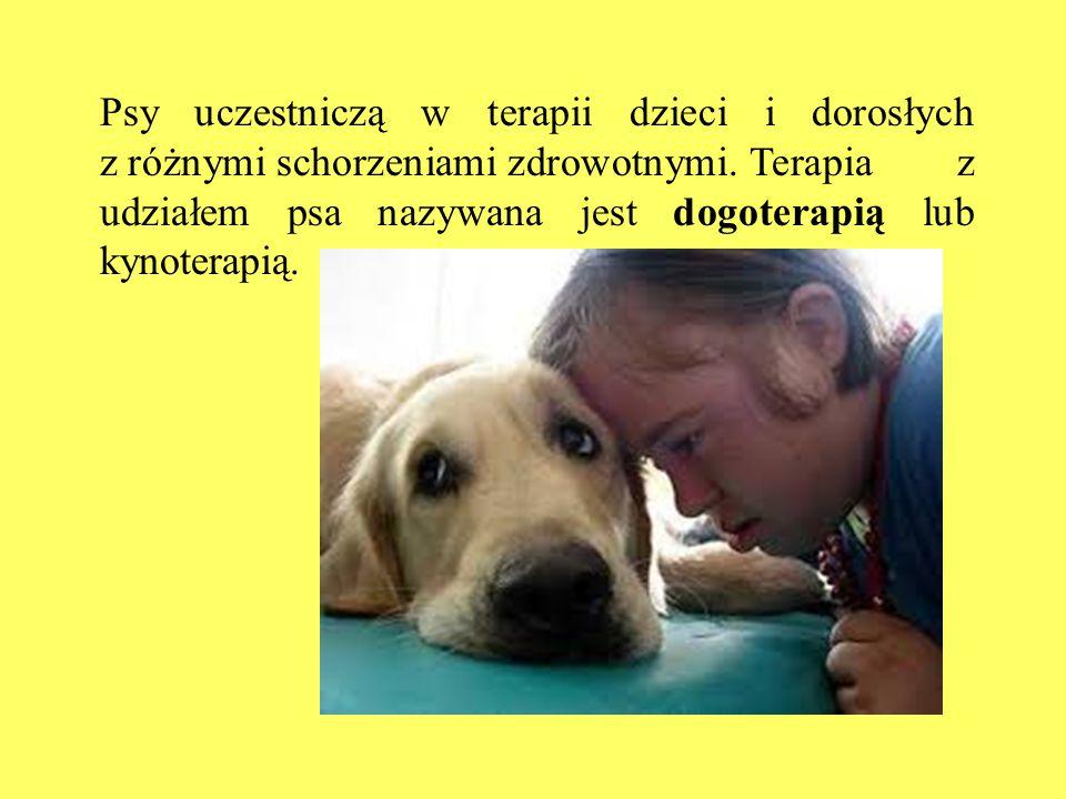Psy uczestniczą w terapii dzieci i dorosłych z różnymi schorzeniami zdrowotnymi. Terapia z udziałem psa nazywana jest dogoterapią lub kynoterapią.