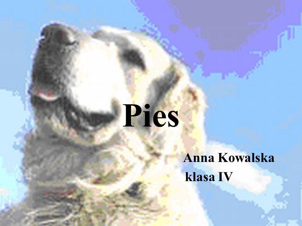 Pies Anna Kowalska klasa IV