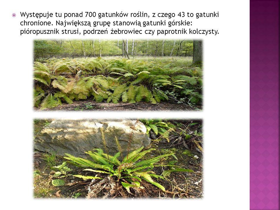  Występuje tu ponad 700 gatunków roślin, z czego 43 to gatunki chronione.
