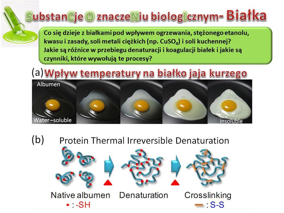 Co się dzieje z białkami pod wpływem ogrzewania, stężonego etanolu, kwasu i zasady, soli metali ciężkich (np.